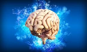 cerveau (pixabay)