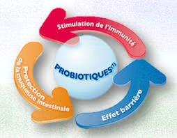 prébiotique et probiotique
