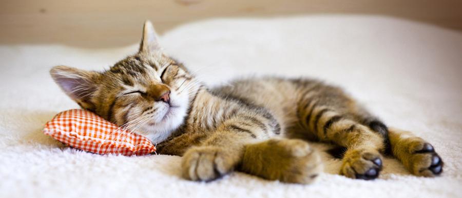 Katzenkissen, Katzenschlafplatz, Katzenbett von running rabbit