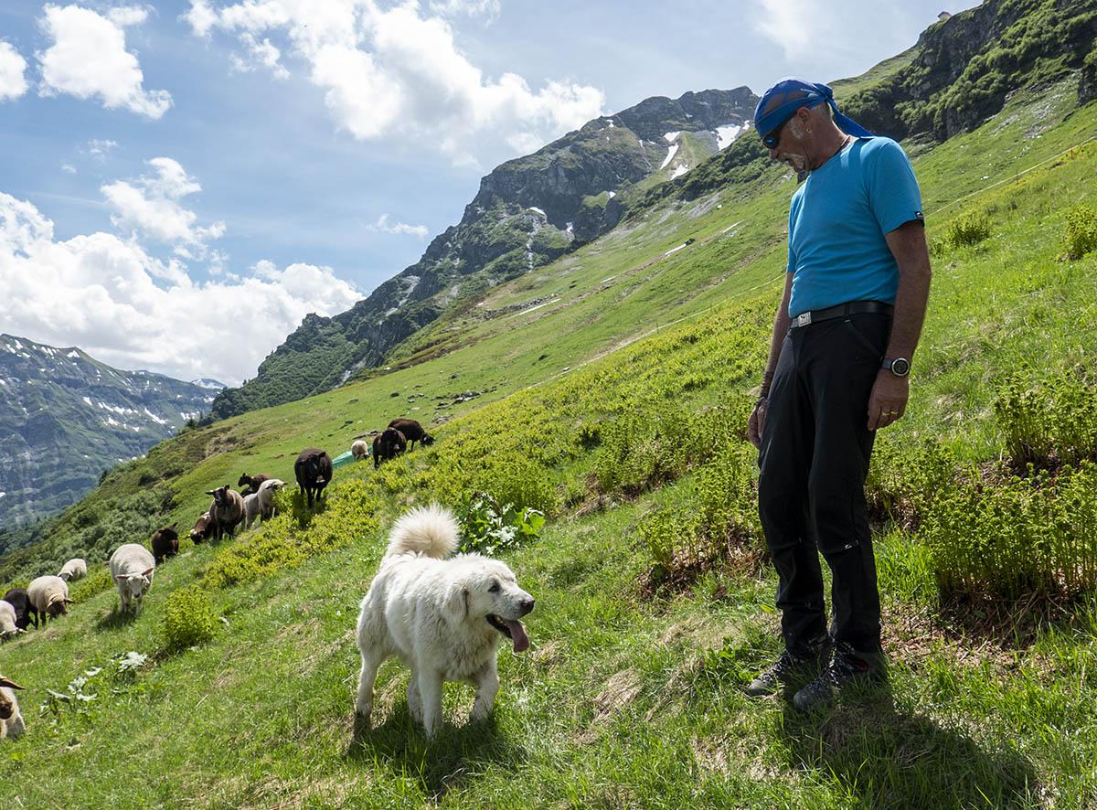 Ein Tag mit Herdenschutzhunden