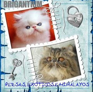 brigantium.jimdo.com