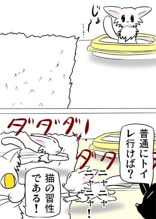 おしっこをした後再び猫用トイレの前で走り回る白猫 ほのぼの・ふわもふ猫の日常四コマweb漫画354話2p