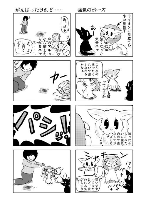 ねこの日常を描いた四コマ漫画ミーのおもちゃ箱49p