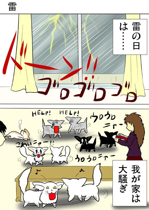 雷に驚いてうろうろするねこたち ふわもふ猫の日常四コマweb漫画326話1p