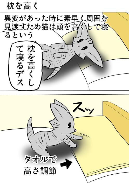 枕の上にタオルを敷くアメリカンショートヘア猫 ほのぼの・ふわもふ猫の日常四コマweb漫画358話1p