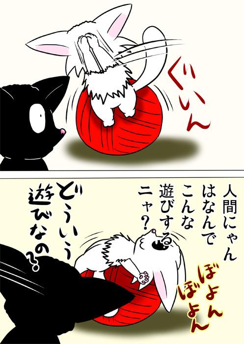 毛糸玉でバランスボール運動をするマンチカン猫 ふわもふ猫の日常四コマweb漫画252話2p