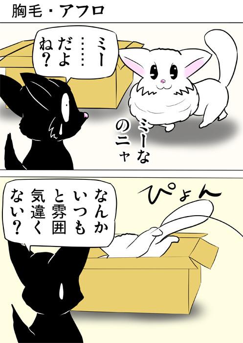 ダンボール箱に入るマンチカン猫 ふわもふ猫の日常四コマweb漫画335話1p