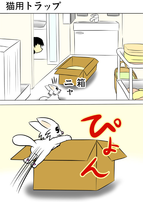 洗面所に置かれたダンボール箱に入ろうとするマンチカン猫 ふわもふ猫の日常四コマweb漫画201話1p