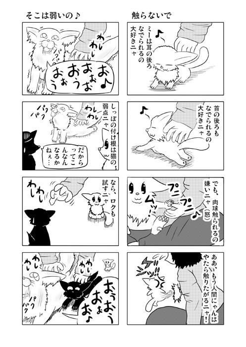 ねこねこ四コマweb漫画ミーのおもちゃ箱39p