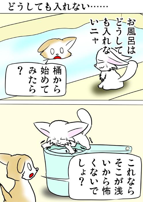 風呂桶の上に立つ白猫