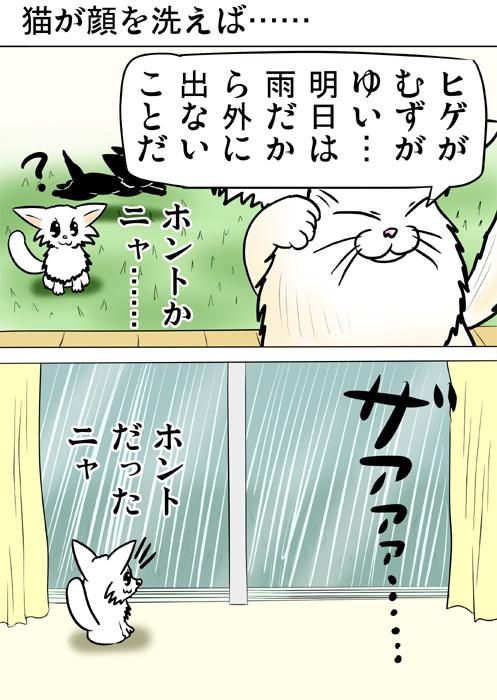 顔を洗って明日の雨を予測するメインクーンネコ 四コマ漫画