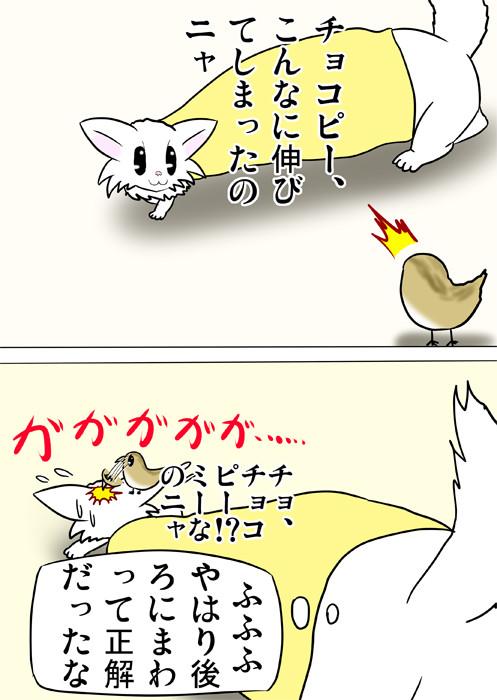 うずらのヒナにつつかれるマンチカン猫 ふわもふ猫の日常四コマweb漫画276話2p