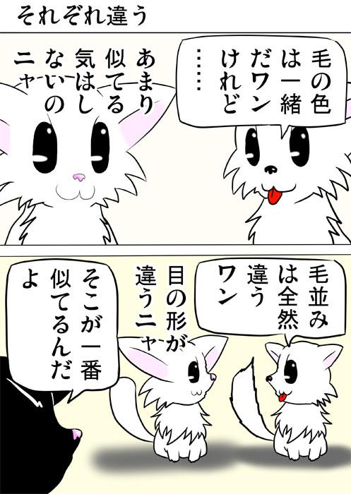 互いの違いを述べるマンチカン猫とポメラニアン犬 ふわもふ猫の日常四コマweb漫画265話1p