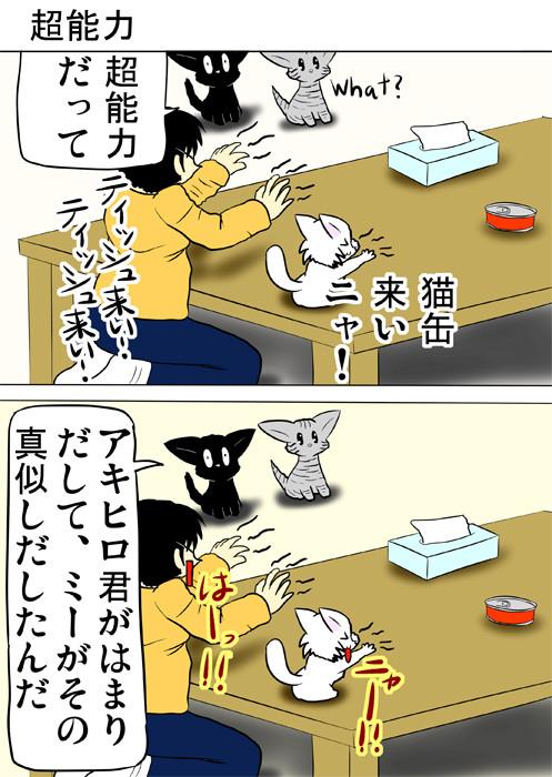 ティッシュ箱と猫缶に超能力をかけようとしているマンチカン猫と少年 ふわもふ猫の日常四コマweb漫画315話1p