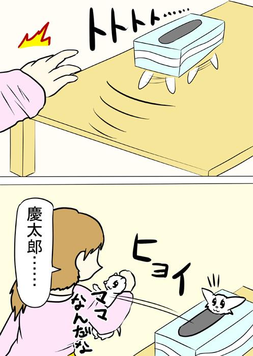 ティッシュ箱から取り出されるフェレット 四コマ漫画