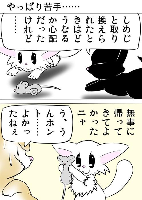 ネズミのおもちゃをスコティッシュフォールド猫に見せる白猫 ほのぼの・ふわもふ猫の日常四コマweb漫画364話1p
