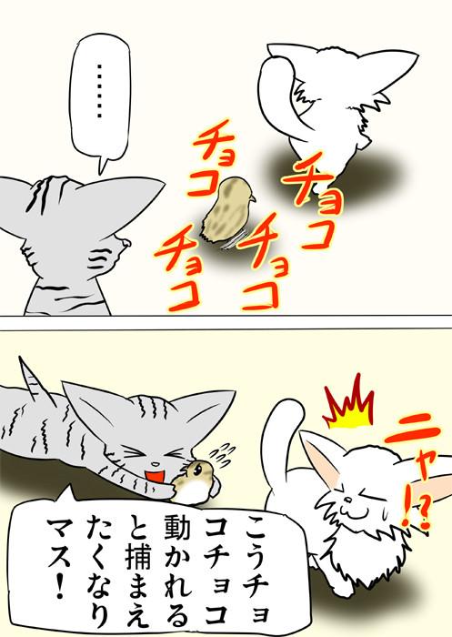 うずらのヒナをつかまえるアメリカンショートヘア ふわもふ猫の日常四コマweb漫画218話2p