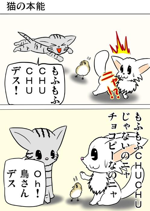 うずらのヒナをネズミのおもちゃとまちがえるアメリカンショートヘア猫 ふわもふ猫の日常四コマweb漫画218話1p