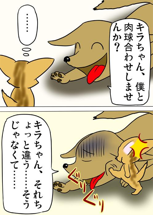 犬の顔を足蹴りするアビシニアン猫 ふわもふ猫の日常四コマweb漫画255話2p