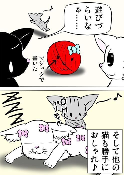 メインクーン猫にリボンをつけていく縞猫