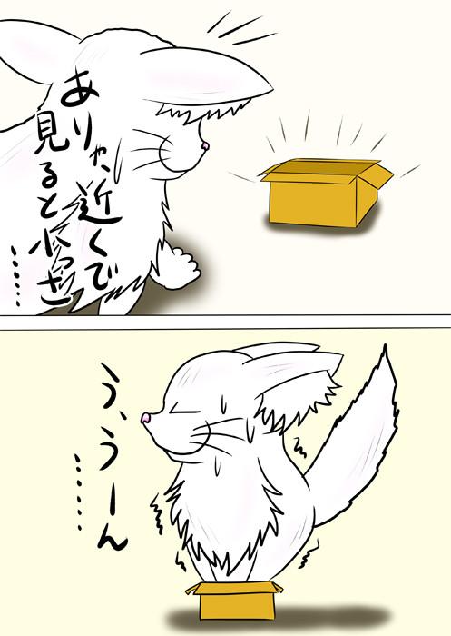 小さな箱にむりやり入るメインクーン猫 ふわもふ猫の日常四コマweb漫画232話2p
