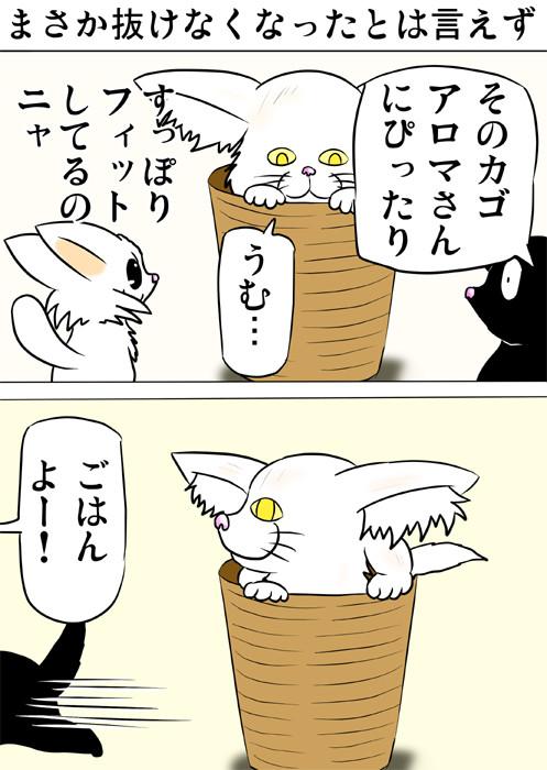 籠にすっぽり入るメインクーン猫 ふわもふ猫の日常四コマweb漫画211話1p