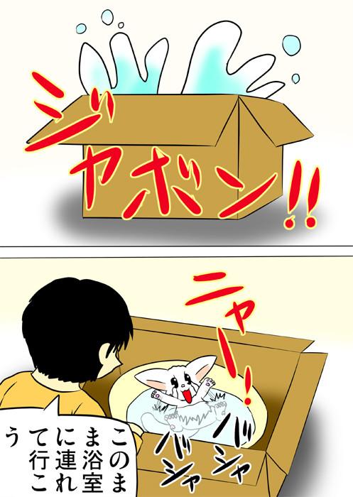 箱に設置された水桶に落ちるマンチカン猫 ふわもふ猫の日常四コマweb漫画201話2p