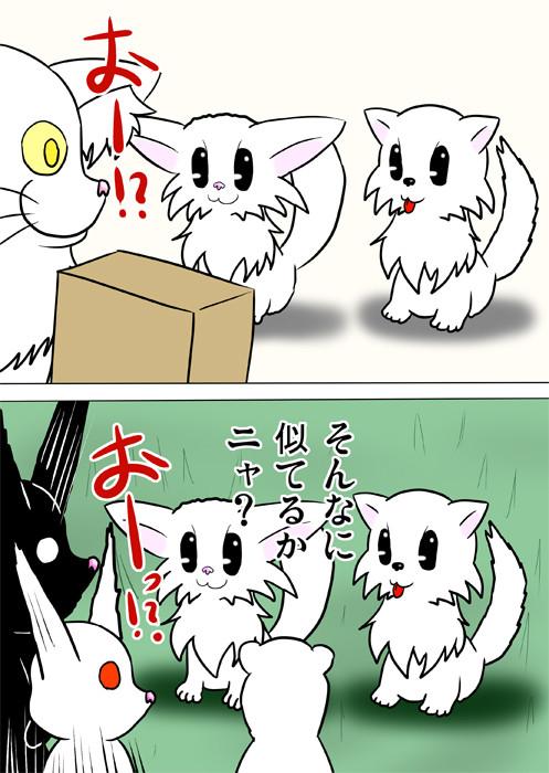 マンチカン猫とポメラニアン犬のそっくりさに驚くペットたち ふわもふ猫の日常四コマweb漫画264話2p