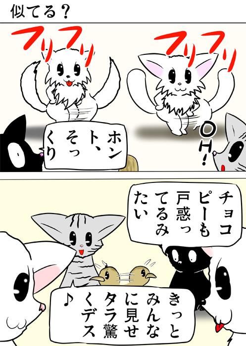 尻ふりダンスをするマンチカン猫とポメラニアン犬 ふわもふ猫の日常四コマweb漫画264話1p