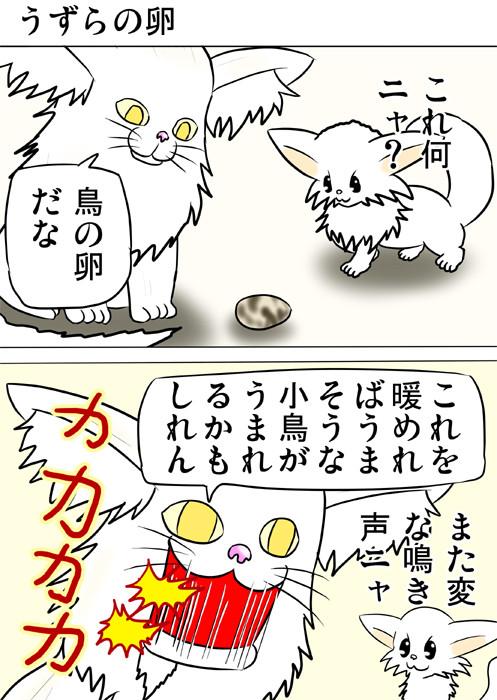 うずらの卵をみてクラッキングするメインクーン猫 ふわもふ猫の日常四コマweb漫画215話1p