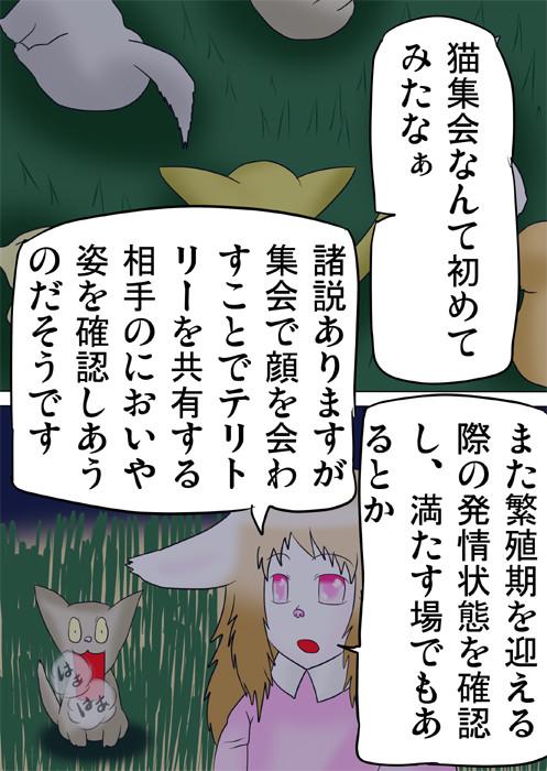 猫集会の真相を説明するウサギ娘 ふわもふケモノ家族連載web漫画ふぁりはみ十九話19p