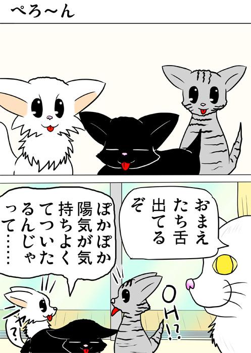 思わず舌が出ている子猫たち ふわもふ猫の日常四コマweb漫画239話1p