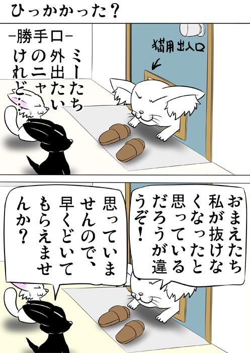 猫用出口に挟まっているメインクーン猫 ふわもふ猫の日常四コマweb漫画311話1p