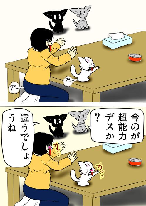 おならをこいて恥ずかしくなるマンチカン猫と少年 ふわもふ猫の日常四コマweb漫画315話2p