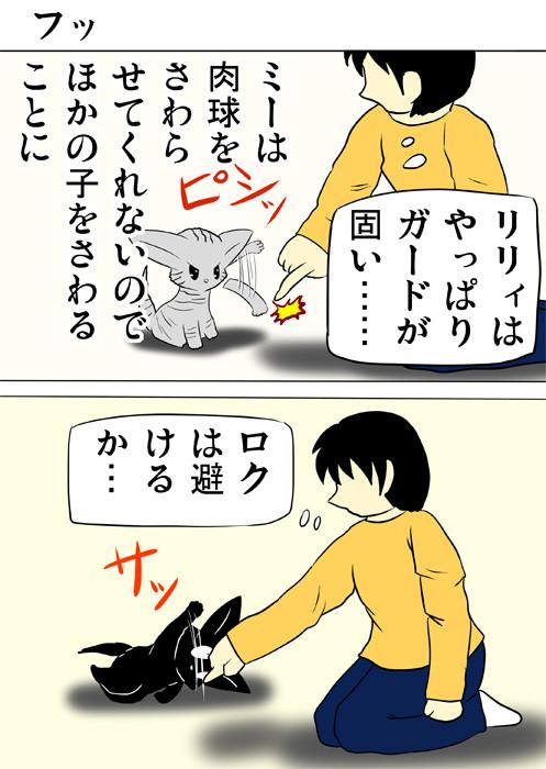 少年の指をはじくアメリカンショートヘア猫 ふわもふ猫の日常四コマweb漫画329話1p