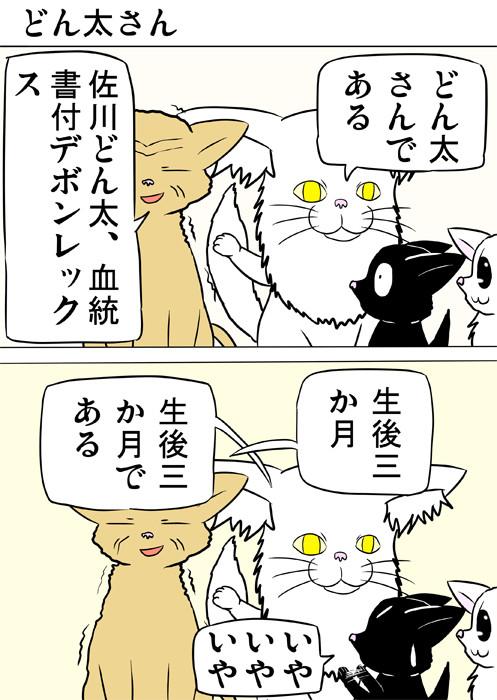うそをつく老猫 ふわもふ猫の日常四コマweb漫画269話1p