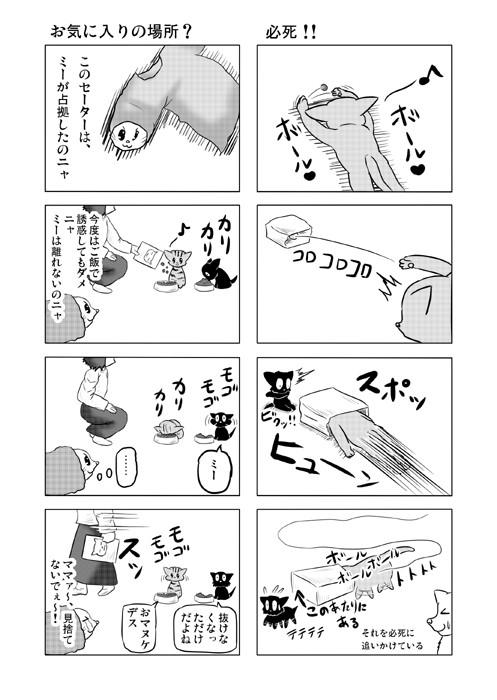 ねこねこ四コマweb漫画ミーのおもちゃ箱13p