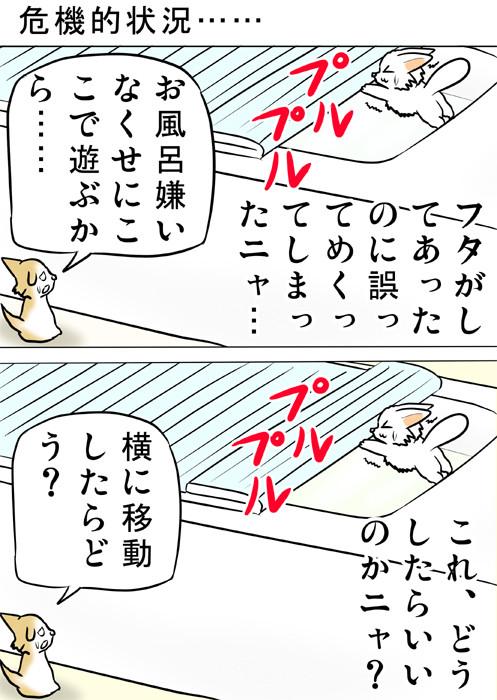 お風呂のふたが開いて落ちそうになるマンチカン ねこ四コマ漫画166話1p