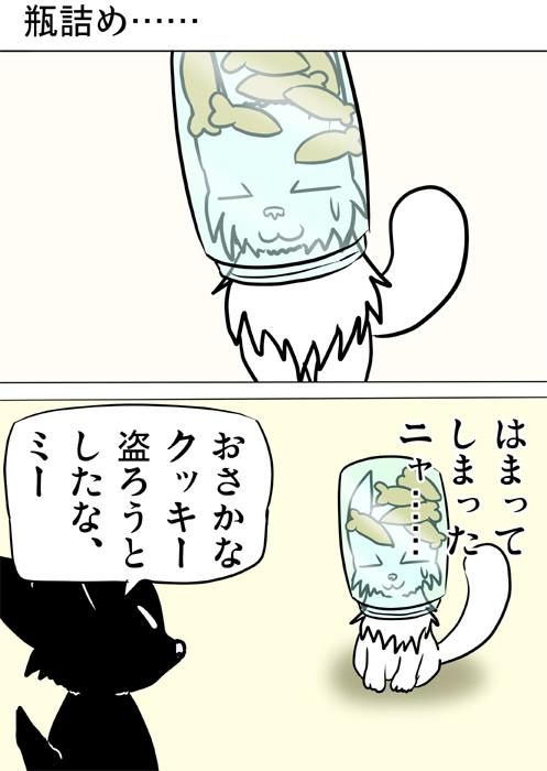 お魚クッキーのはいった瓶に顔がはまるマンチカン猫 四コマ漫画163話1p