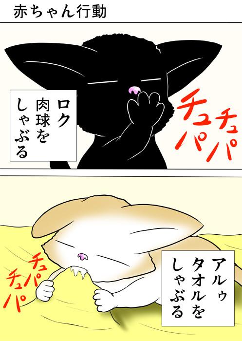肉球をしゃぶる黒猫 タオルをしゃぶるスコティッシュフォールド ふわもふ猫の日常四コマweb漫画316話1p