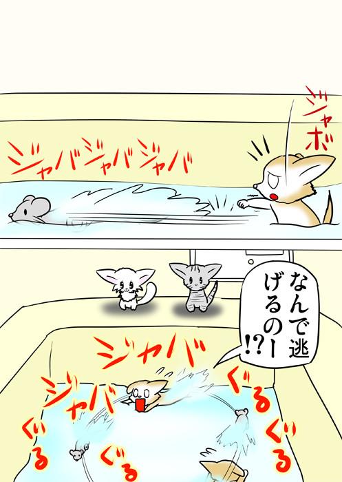 泳いでネズミのおもちゃを追いかけるスコティッシュフォールド猫 ふわもふ猫の日常四コマweb漫画279話2p
