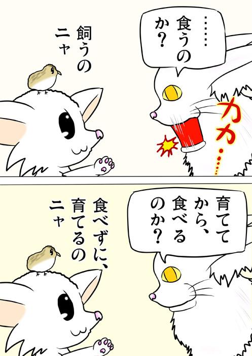 うずらのヒナを食べずに飼うというマンチカン猫 ふわもふ猫の日常四コマweb漫画217話2p