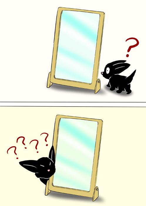 鏡の裏に回り込む黒猫