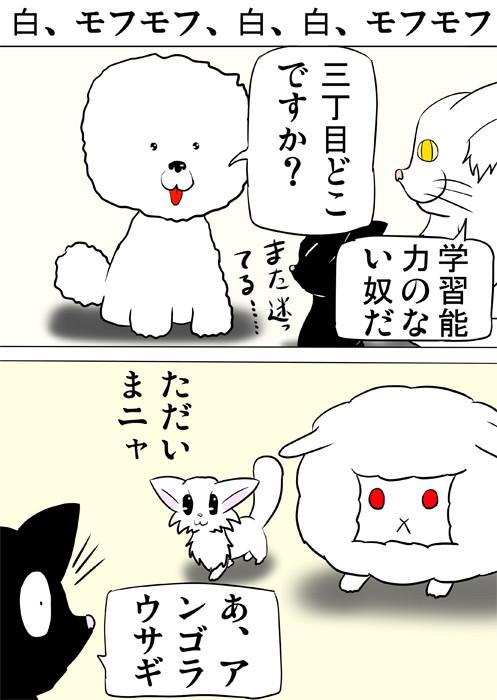 アンゴラウサギを連れてくるマンチカン猫 ふわもふ猫の日常四コマweb漫画318話1p