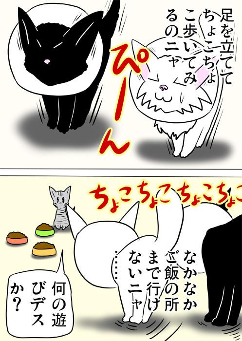餌に向かってちょこちょこ歩く子猫達 ふわもふ猫の日常四コマweb漫画336話2p