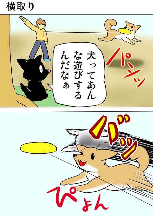 フリスビーする犬を眺める黒猫 ふわもふねこ四コマweb漫画ミーのおもちゃ箱173話1p