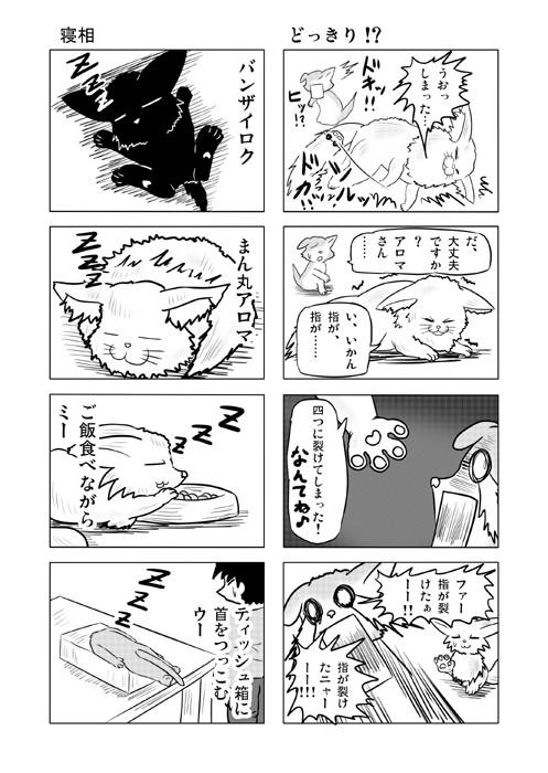 ねこねこ四コマweb漫画ミーのおもちゃ箱21p