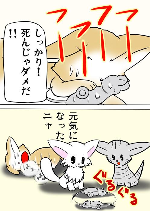 ネズミのおもちゃに人工呼吸をするスコティッシュフォールド猫 ふわもふ猫の日常四コマweb漫画280話2p