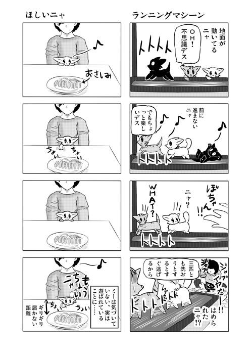ねこねこ四コマweb漫画ミーのおもちゃ箱16p