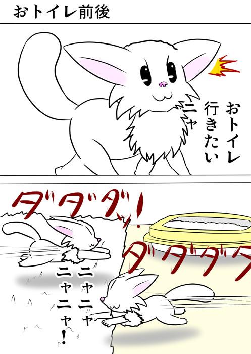 猫用トイレの前を走り回る白猫 ほのぼの・ふわもふ猫の日常四コマweb漫画354話1p